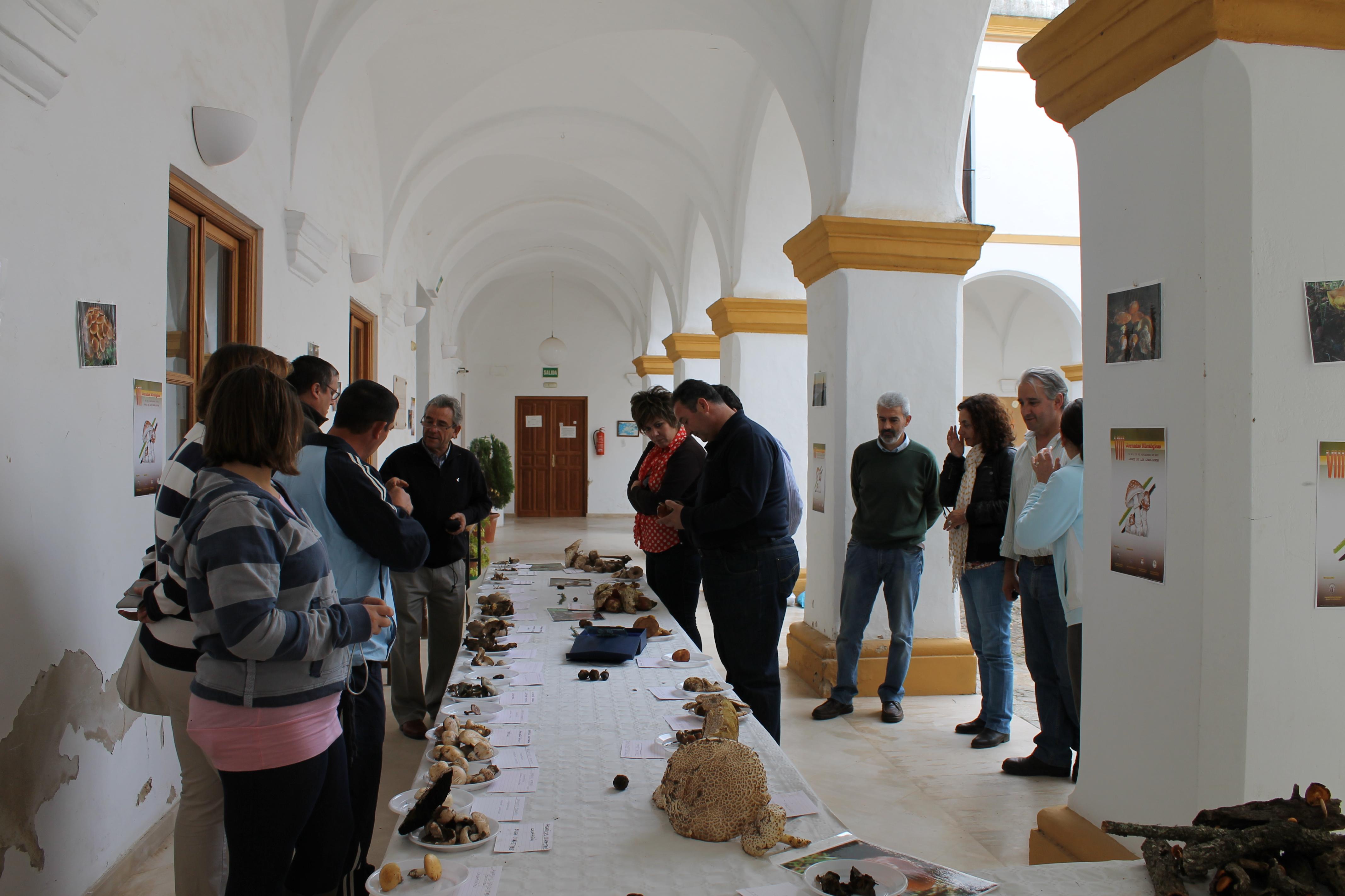 La Asociación Cultural Micológica clausuró sus VIII Jornadas micológicas con una exposición de setas